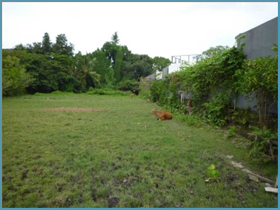 14 acres  in Loresho Nairobi